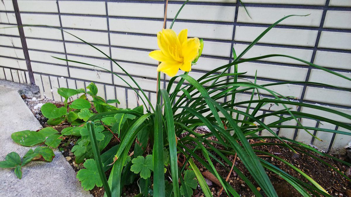 季節外れの開花