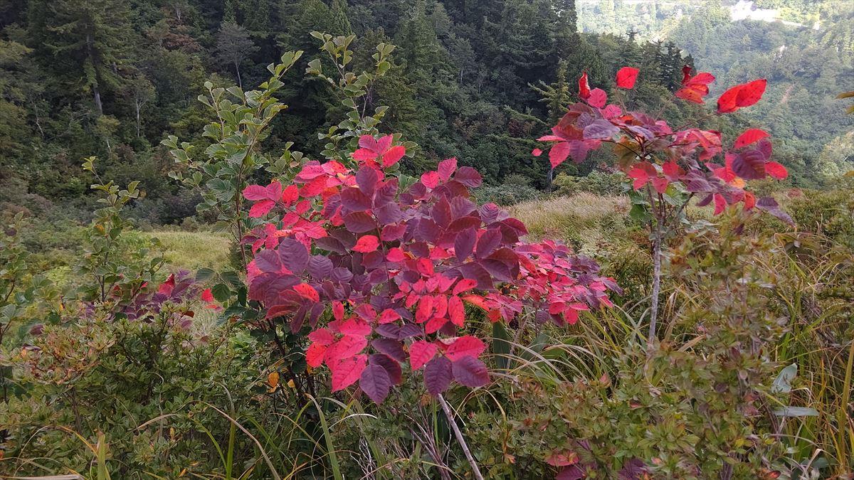 ホワイトロード(三方岩岳)の紅葉